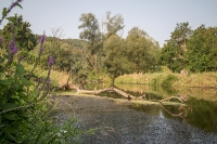 Der Kamp zwischen Rosenburg und Stiefern