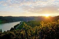 Pfaffenberg - Sonnenuntertgang über der Wachau